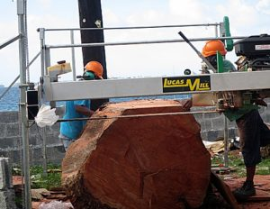 Large Lukwej tree being milled by Oliber Mack and Matson John. Photo: Sealend Laiden