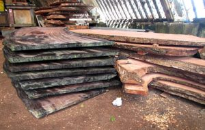 Stacked Lukwej slabs in WAM's Canoe House. Photo: Sealend Laide