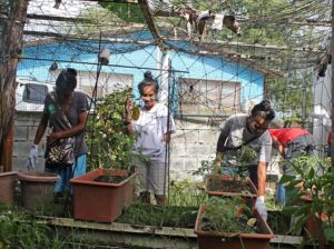 WAM trainees Rona Stephen, Idelia Stephen and Aklok Edward enjoying the gardening experience. Photo: Suemina Bohanny